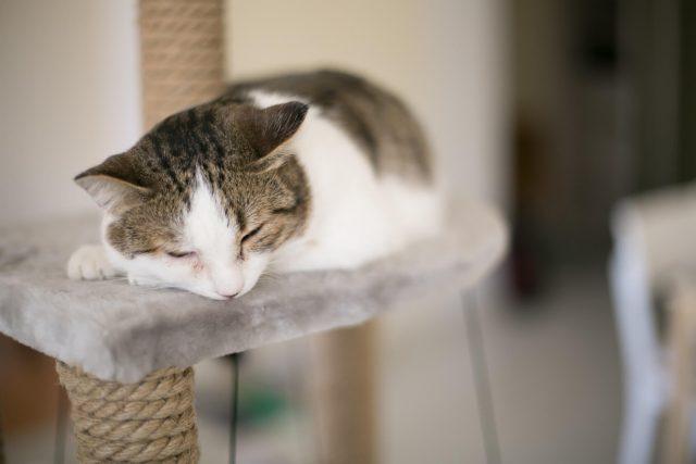 ペットの猫とマンション暮らし